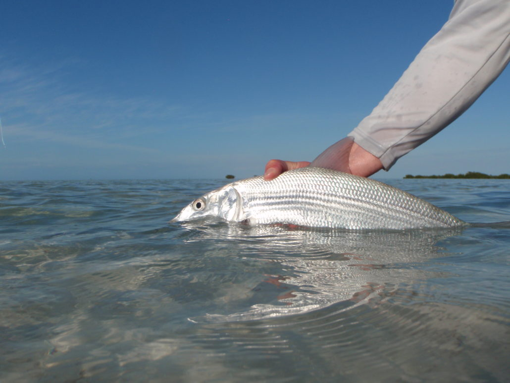 Cuba cayo largo the blue quill angler for Fly fishing trips