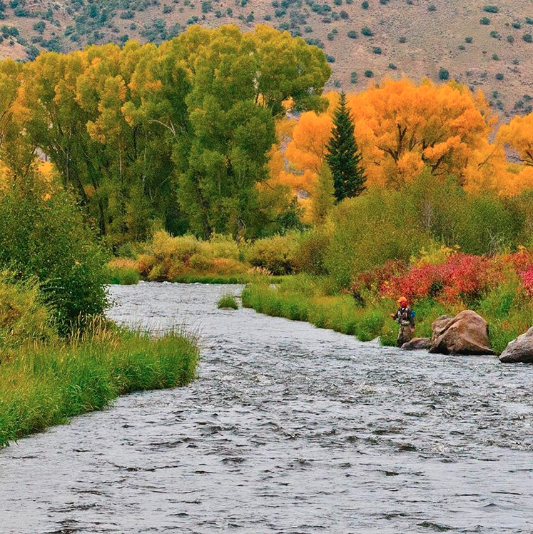 Fly Fishing Corporate Trips - Guided Colorado Fly Fishing with the Blue Quill Angler