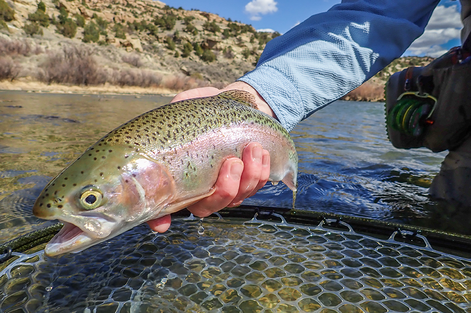 Fly Fishing on the San Juan River - Destination Fly Fishing Trips with the Blue Quill Angler - 7