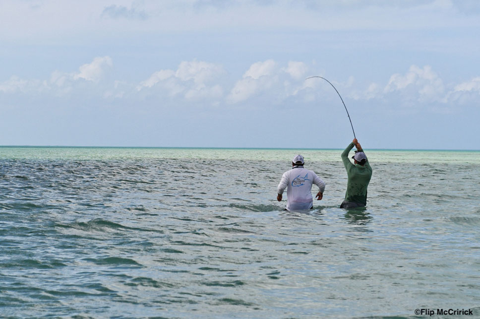 The Fight - Palometa Club Destination Trip Fly Fishing with the Blue Quill Angler