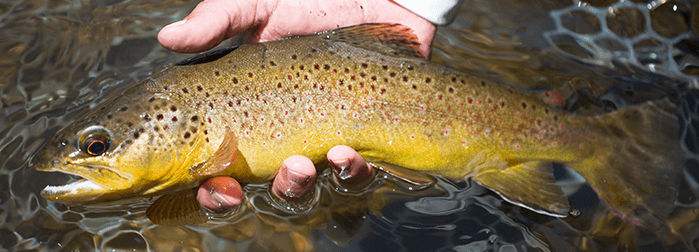 Learn How To Tie Dry Flies at The Blue Quill Angler