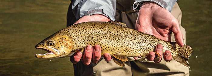 Colorado Fly Fishing - An Introductory Course with the Blue Quill Angler